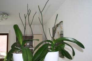 Всё, что нужно цветоводу делать дальше, если отцвели орхидеи. Как ухаживать за растением в домашних условиях?