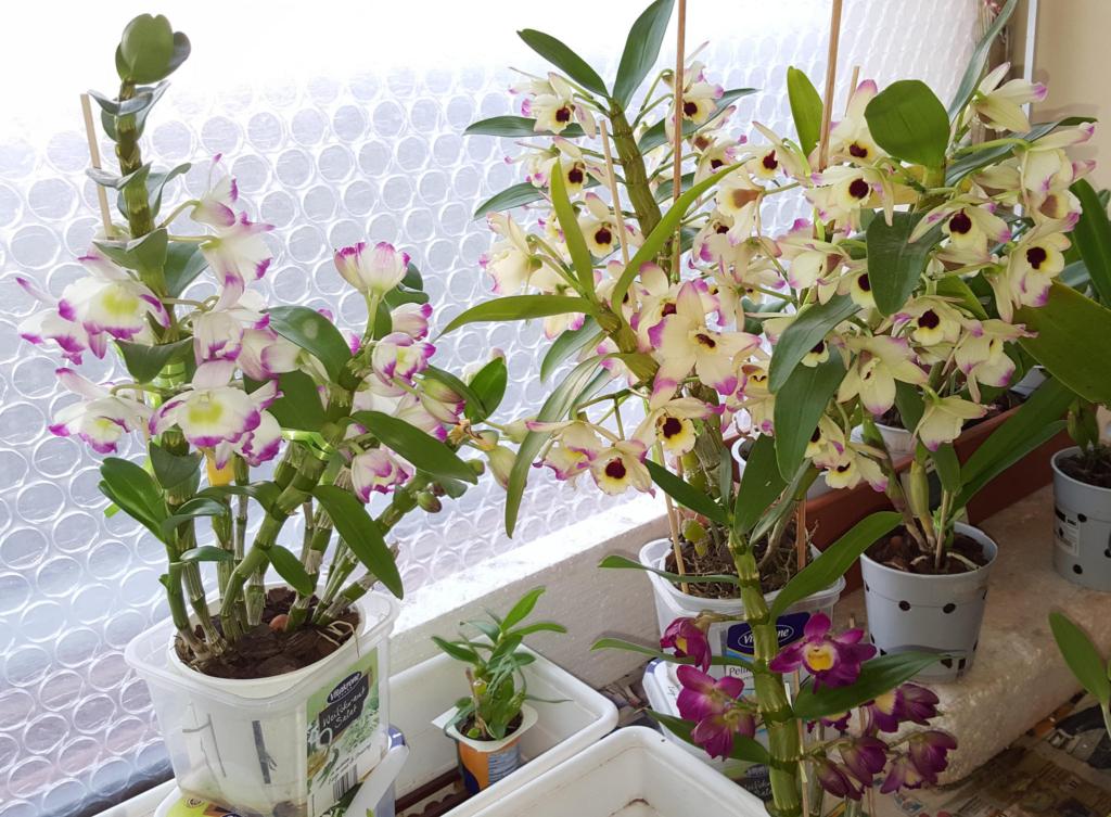 Нужно ли обрезать орхидею после цветения и как правильно это делать?