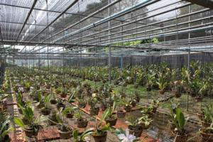 Орхидеи – эффектные и невероятные. Как самостоятельно вырастить цветы?