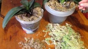 Какой грунт нужен орхидеям, как приготовить субстрат самостоятельно? Магазинная продукция