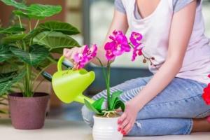 Как ухаживать за орхидеей- каков уход цветка в горшке в домашних условиях
