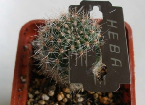 Способы, как размножить кактус. Лучшие варианты и уход