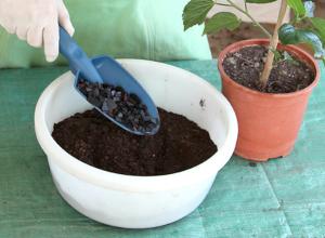 Выбор почвы для гибискуса и горшка для комнатного цветка. Подготовка земли и уход