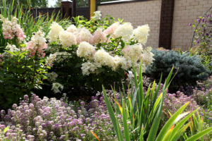 С чем сочетается гортензия, где лучше сажать? Соседи по клумбе и цветочные композиции из разных сортов