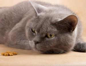 Кошки и комнатные растения: ядовита драцена для них или нет, чем опасна?