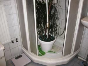 Тропическая пальма в домашних условиях: какие виды можно вырастить в квартире и какой уход им требуется?