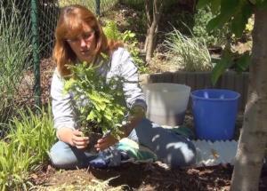 Украшение участка — садовый папоротник: характеристика, виды, посадка и уход