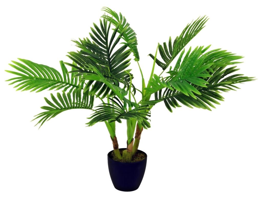 Тропические пальмы рода Арека: особенности, разновидности и уход за культурой в домашних условиях