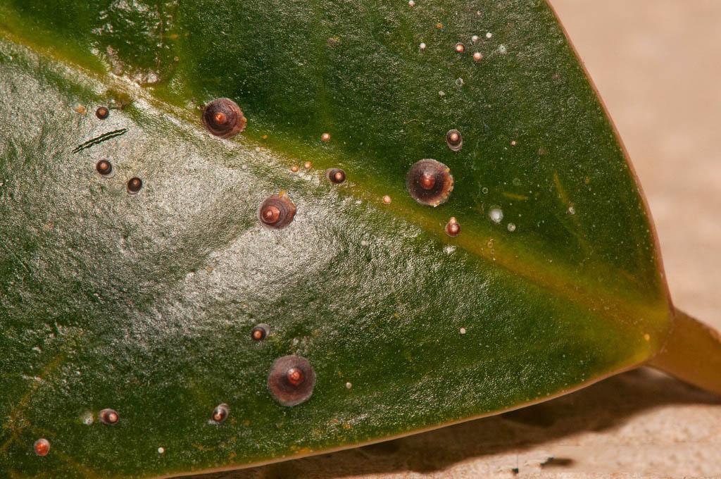 Опасная щитовка: виды насекомого и способы борьбы с ним в домашних условиях